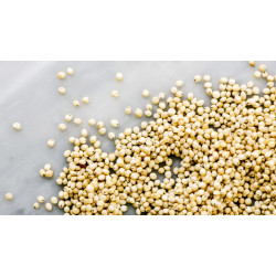 Sorghum (चारा), 500 g