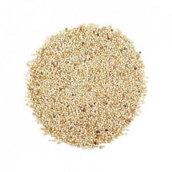 Krn Poppy seeds (Gasagasalu)