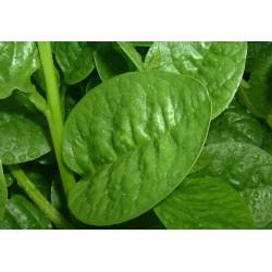 Vgl Malabar Spinach (पालक)