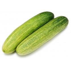 Vg Cucumber Kheera Dosakaya