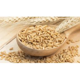 Krn Barley (barli)