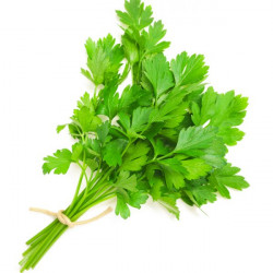 Vgl Coriander leaves -...
