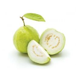Fr Guava (Jama pandu)
