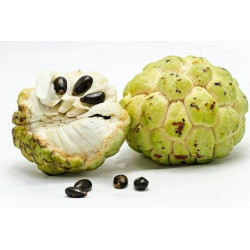 Fr Custard apple (seetha...